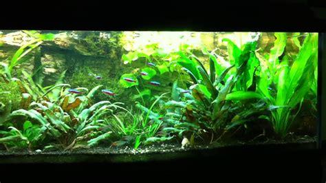 beleuchtung aquarium aquarium led beleuchtung