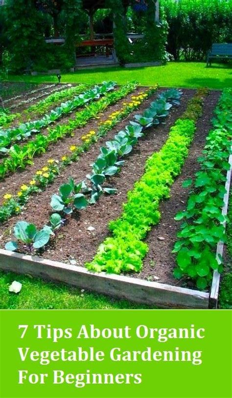 how to start an organic vegetable garden in your backyard organic gardening gardening steps