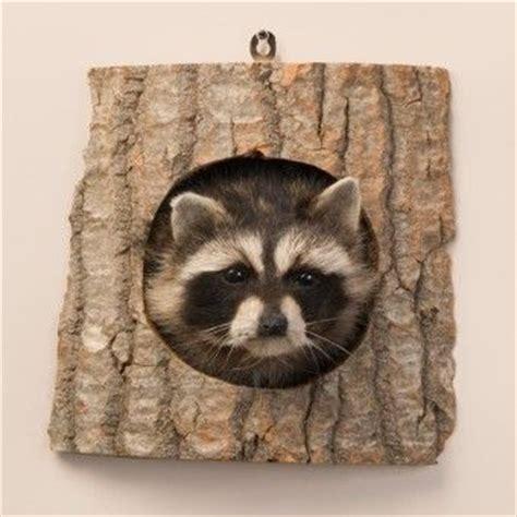 cute rustic mountain woods black bear upside down hook new 10 best bear mounts images on pinterest trophy rooms