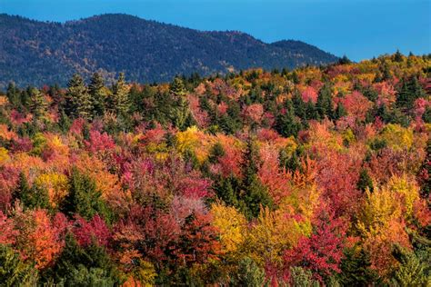how to see new fall foliage at its peak