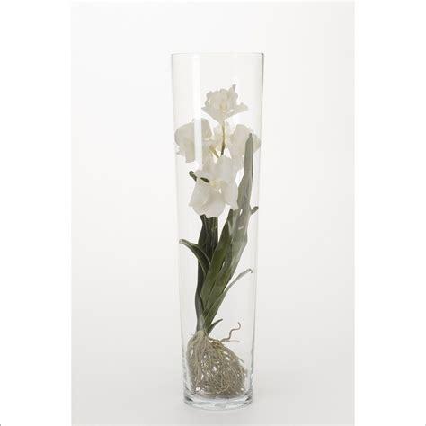 orchidea vaso trasparente orchidee vanda blanc dans vase transparent h 70 cm