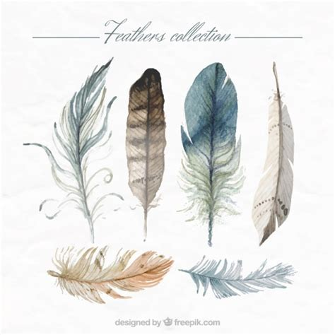 clipart collection free painted feathers collection vector free