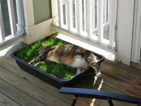 grass box planter box with grass patch for cats cats