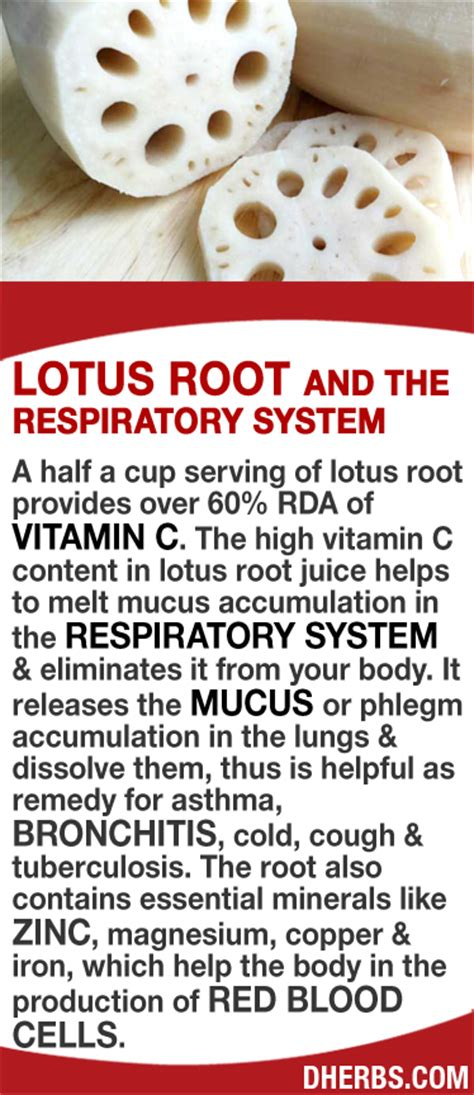 1000 ideas about root system on roots andy
