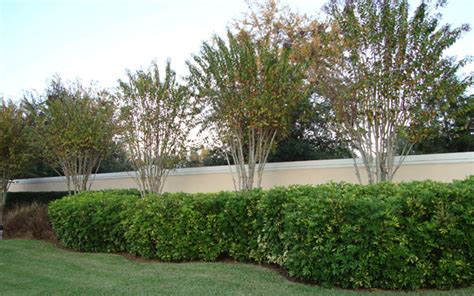 Garden Center Fort Myers Landscape Shrubs Fort Myers