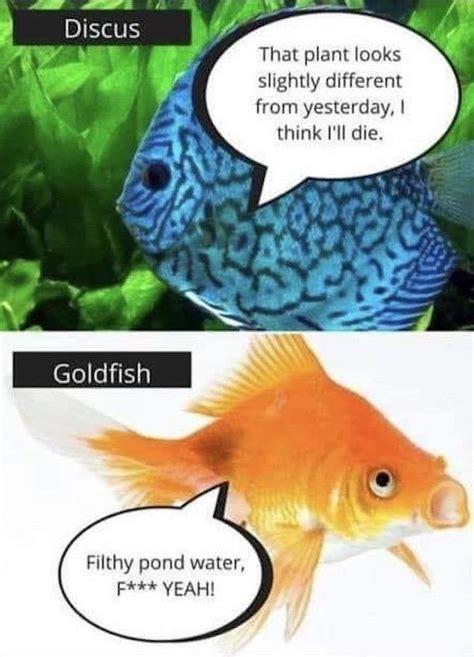 aquarium memes  pics
