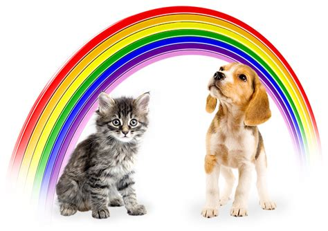 puppies and rainbows even though it doesn 226 t scream or shout the new clarins 195 clat make up