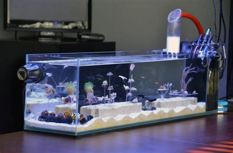 best nano fish tank best fish nano tank remove the tomini tang from this
