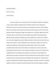 Urinary System Essay urinary system essay draft ferguson a p 2 mf 12 pm urinary system the urinary