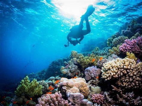 great scuba diving sites  malaysia silverkris