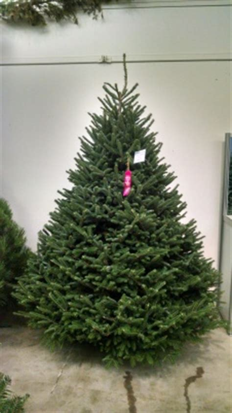 what is the most fragrant fir tree for christmas tree varieties available tree types