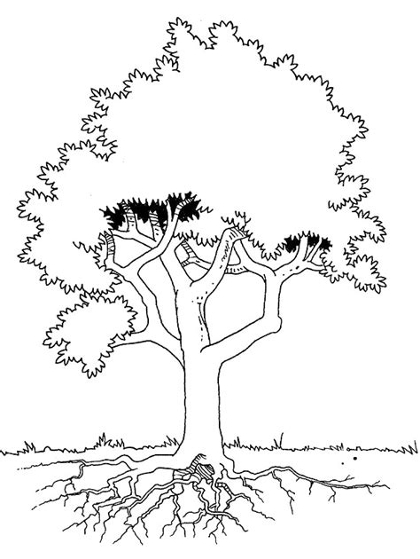 coloring page of tree with roots simple tree roots coloring coloring pages