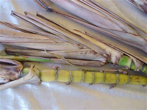 Bungkil Kedelai Jambi pucuk daun tebu sugarcane top 171 forsum