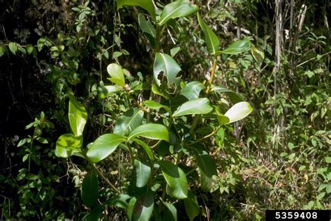 Plants From The Tropical Rainforest - tropical rainforest 5359408