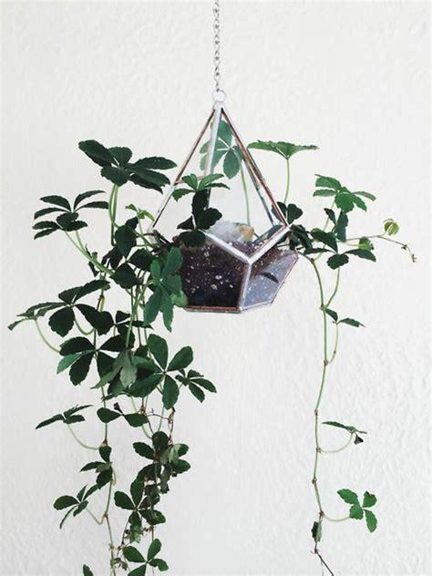 deko der decke hängend h 228 ngende zimmerpflanzen bilder anreizenden blumeneln