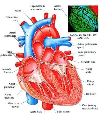 no resi obat jantung obat alami jantung koroner pesan sekarang juga obat