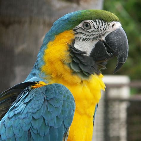 parrot animal wildlife