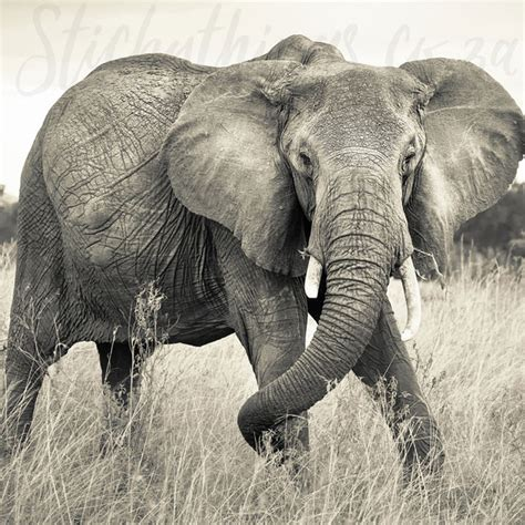 elephant wallpaper for walls african elephant wall mural sepia elephant wallpaper