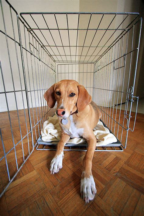puppy wont stop barking in crate top 5 reasons your won t crate thedogtrainingsecret