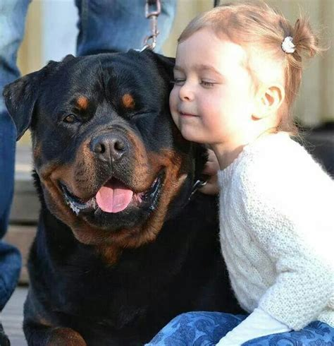 rottweiler meaning quot rottweiler are so quot