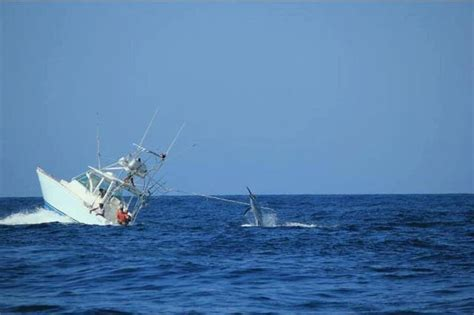 fishing boat sinks boat sinks while trying to reel in a marlin the chicago