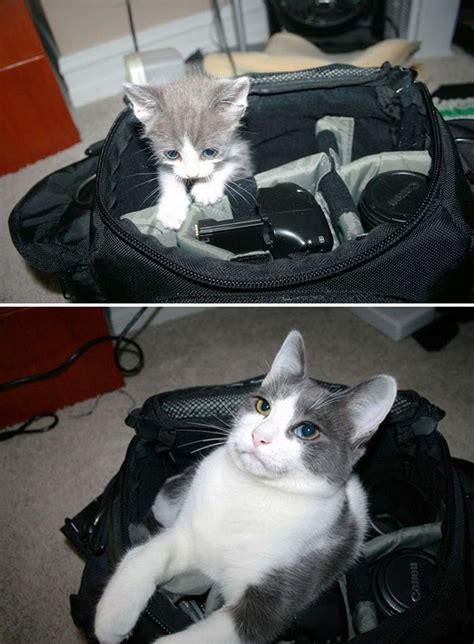 15 before and after photos of cats growing up bored panda