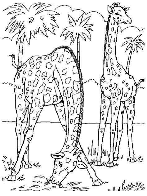 coloring pages of a giraffe free printable giraffe coloring pages for kids