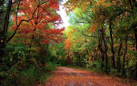 autumn forest path leaves wallpapers autumn forest