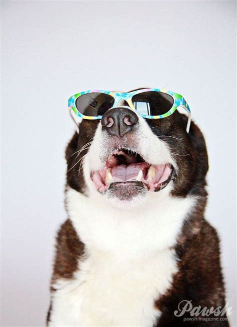 puppies wearing sunglasses dogs wearing sunglasses photography