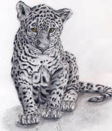 Drawings Of Jaguars Baby Jaguar By Punxnotdead309 On Deviantart