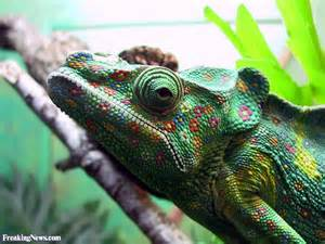 colored animal pictures freaking news