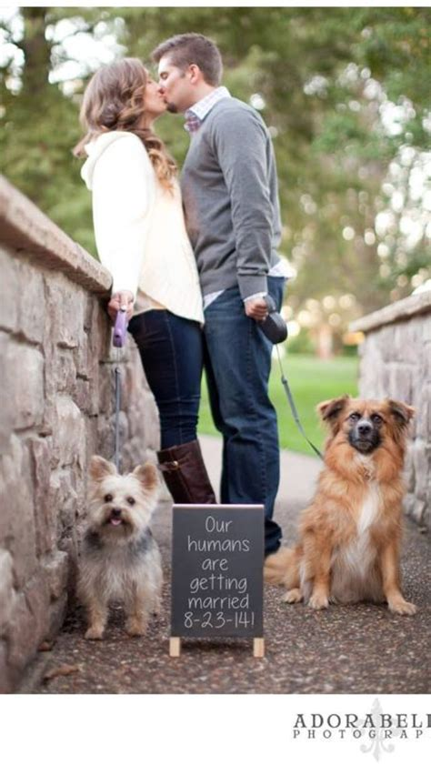 engagement photos with dogs 25 best ideas about engagement pictures on engagement photos