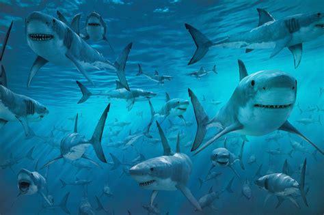 Christmas Films Shark Hd Wallpapers Movie Hd Wallpapers