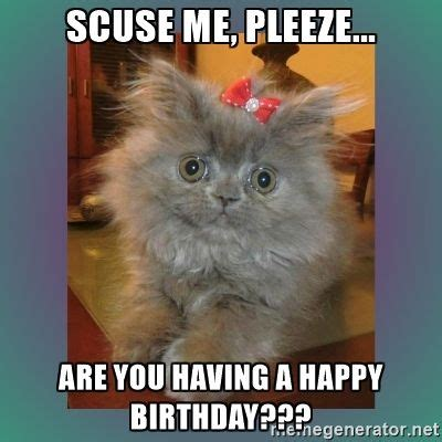 Meme Cat Generator - best 25 birthday meme generator ideas on pinterest