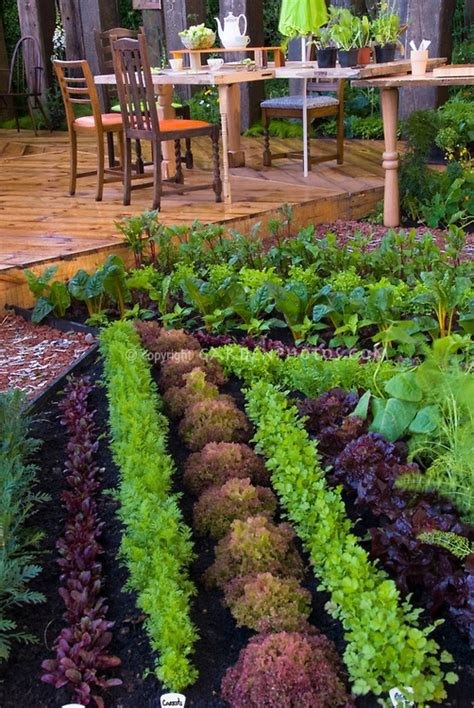 Great Gardening Ideas Vegetable Garden Favething