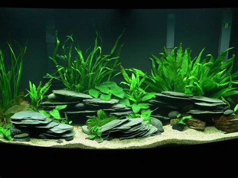 aquarium rock design ideas best 25 aquarium ideas ideas on pinterest aquarium