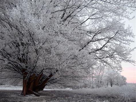 imagenes de arboles invierno 225 rbol escarcha helada invierno valla nieve prado