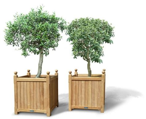 pair  extra large versailles planter teak garden