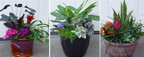 Indoor Container Gardening Ideas Image Gallery Indoor Container Gardens