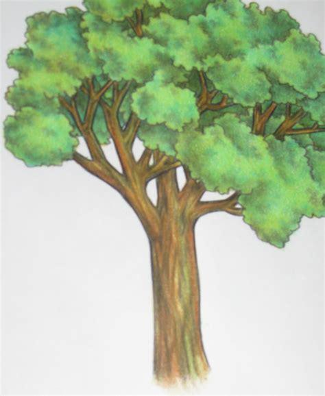vorhänge zeichnen kleiner baum mit breiter krone schattenbaum prunus