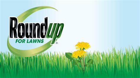 roundup for lawns roundup roundup for lawns 1 ready to use refill 1 25 gal