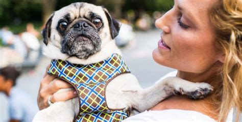when is international puppy day 8 ways to celebrate international day
