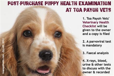 New Puppy Blood In Stool by 20070406about Toa Payoh Vets Singapore Toa Payoh Veterinary Surgery Animal Doctor
