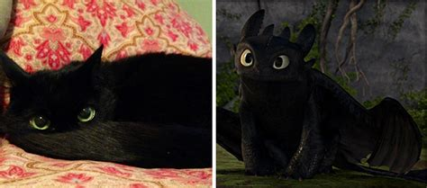 how to your to like cats 20 cats that look like other things bored panda