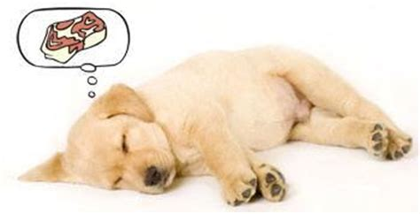 dreaming of puppies how do puppies sleep a day patterns habits places daily stuff