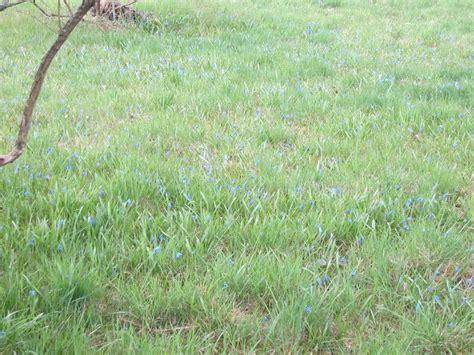 botanischer garten berlin samen kaufen mein naturgarten der kleingarten als biotop
