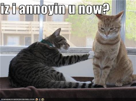 Annoying Cat Meme - a life full of memories random post annoying friends