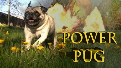 pug working out power pug