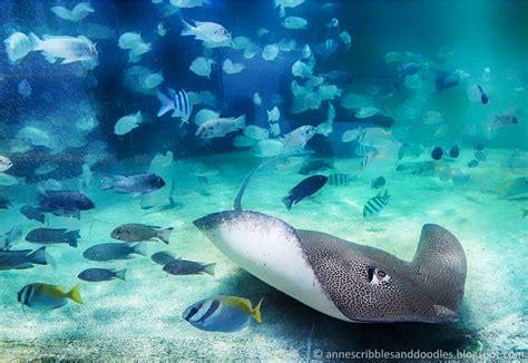 Travel Themed Home Decor Manila Ocean Park Sharks And Rays Encounter Anne S