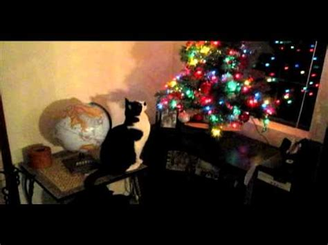 cats knocking over christmas trees 2010 cat knock tree